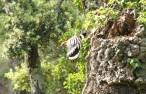 flying h 3
